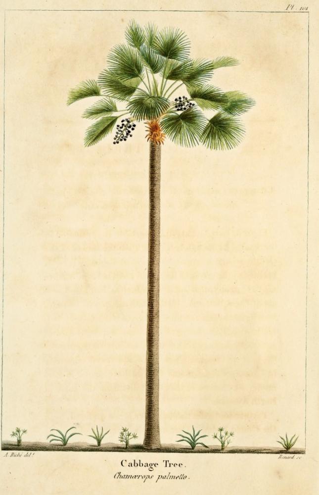 Palm Tree Poster, Plant, Poster Satış, all posters, kanvas tablo, canvas print sales
