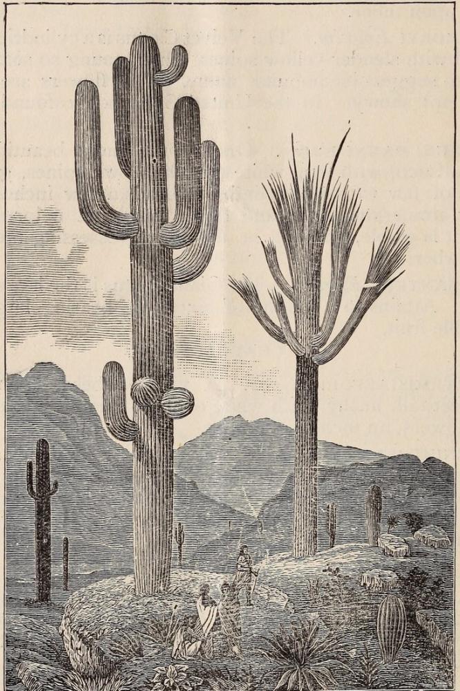 Cactus Poster, Plant, Poster Satış, all posters