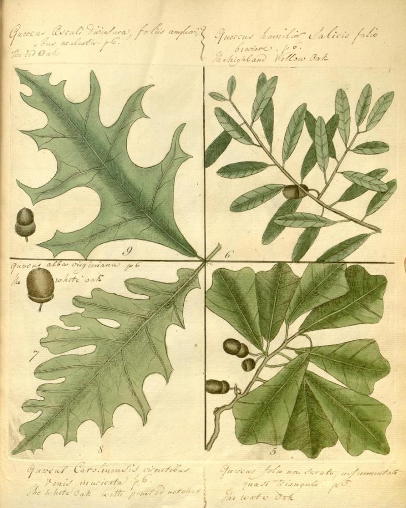 Curious Treeas Poster, Plant, Poster Satış, all posters, kanvas tablo, canvas print sales