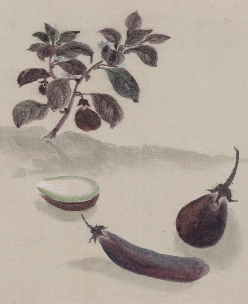 Eggplant Poster, Plant, Poster Satış, all posters, kanvas tablo, canvas print sales