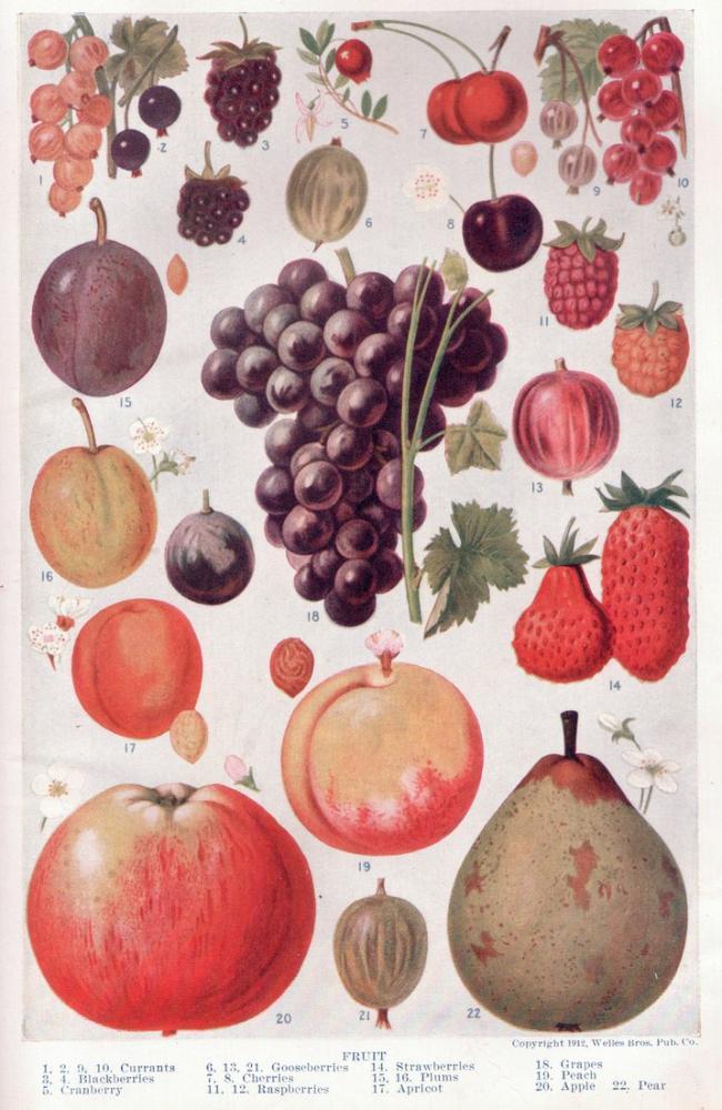 Fruit Page Poster, Plant, Poster Satış, all posters, kanvas tablo, canvas print sales