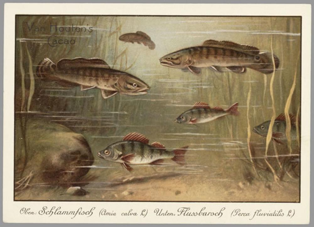 Schlammfisch Vintage Poster, Vintage, Poster Satış, all posters, kanvas tablo, canvas print sales