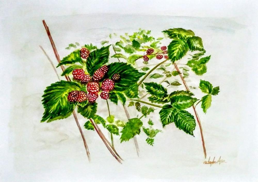 BlackBerry, Original Paintings, , kanvas tablo, canvas print sales