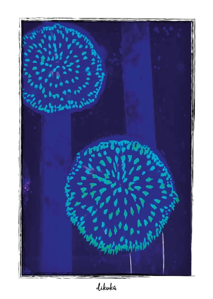Fungia Plates, Digital, , kanvas tablo, canvas print sales