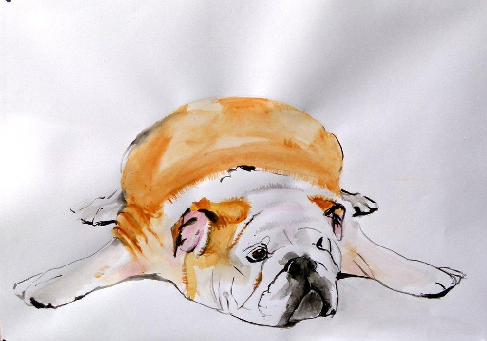 Bulldog, Original Paintings, , kanvas tablo, canvas print sales