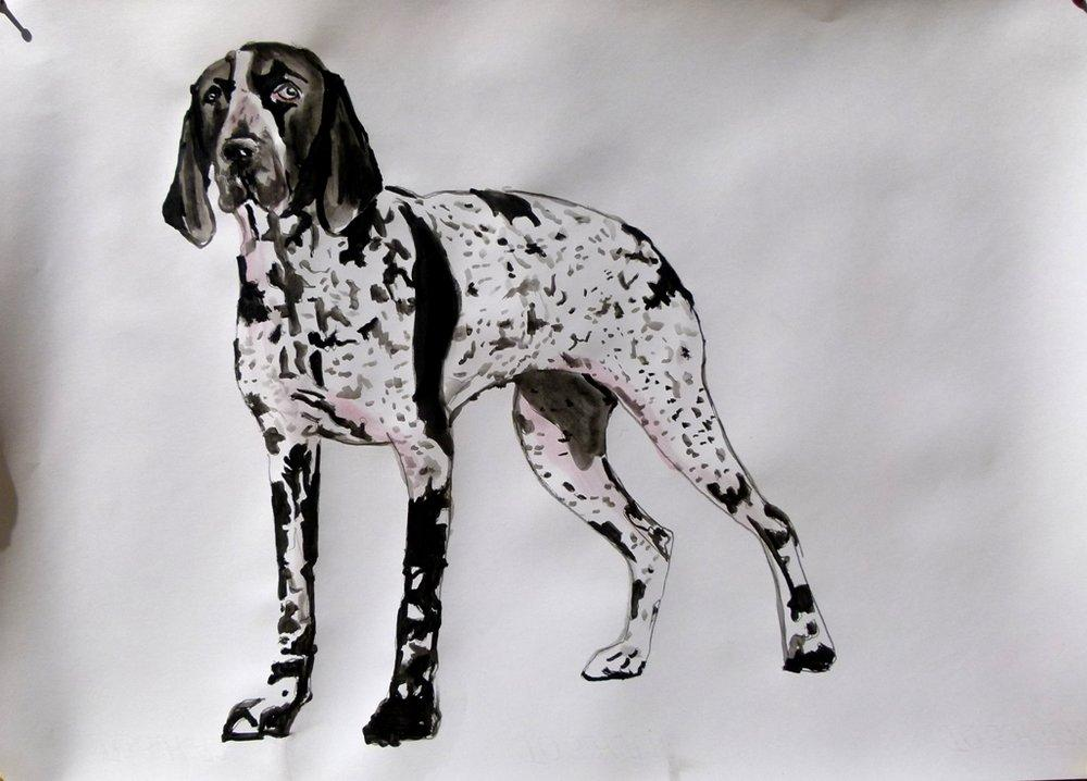 German-Shorthaired-Pointer, Original Paintings, Soso Kumsiashvili, kanvas tablo, canvas print sales