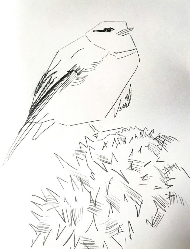 Bird-1, Original Paintings, , kanvas tablo, canvas print sales