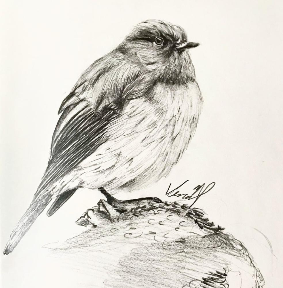 A Bird, Original Paintings,